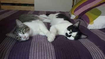 92 - Nico und Oliver