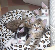K 48 - Katzenbabys