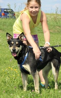 Minni, Lapplaendischer Rentierhund, mit Flo