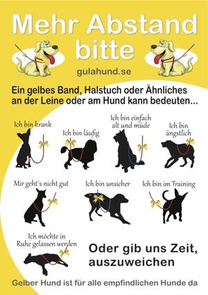 http://www.tierheim-kronach.de/wp-content/uploads/2013/02/Gelber-Hund.jpg