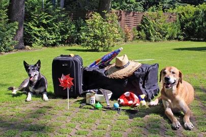 verreisen-mit-hund-(c)aktiontier_both