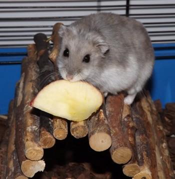 Manfred, Hamster 3