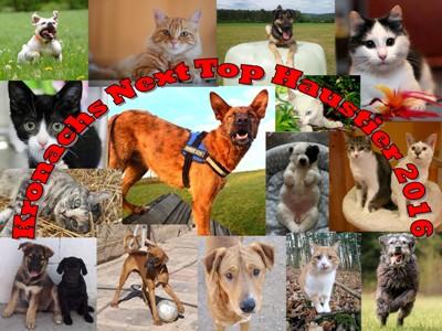 Kopie von Kronachs Next Top Haustier 2016