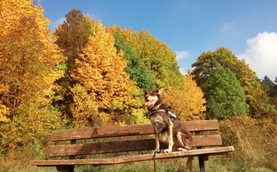 Goya, Podencomix, Herbstlaub