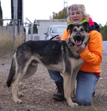 Athor, Schaeferhundmix, mit Poelli 3