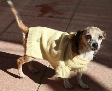 Linda, Chihuahuamix 5